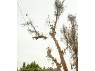 Tree Removal in Sacramento